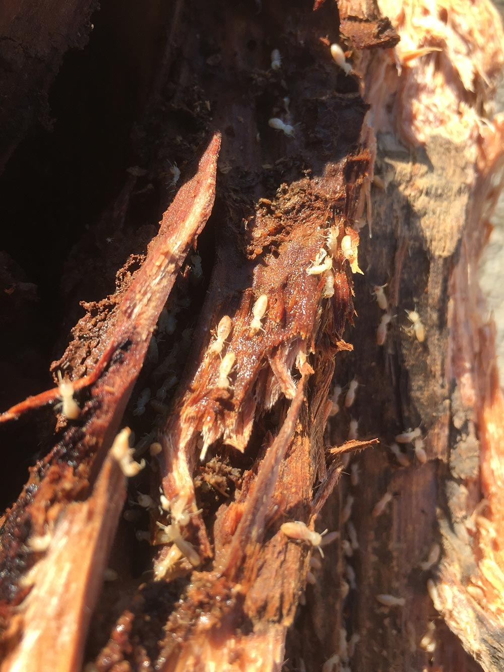 Building and Timber Pest Inspection